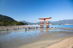 宮島 嚴島神社の大鳥居の写真素材 [FYI03016992]