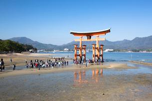 宮島 嚴島神社の大鳥居の写真素材 [FYI03016995]