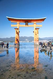 宮島 嚴島神社の大鳥居の写真素材 [FYI03016996]