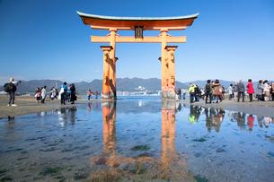 宮島 嚴島神社の大鳥居の写真素材 [FYI03016997]