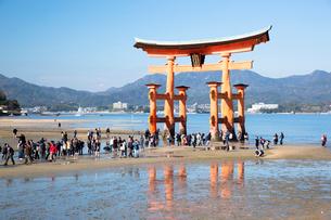 宮島 嚴島神社の大鳥居の写真素材 [FYI03016998]