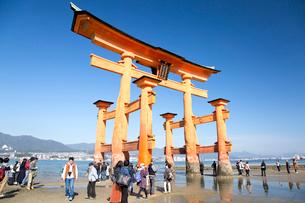 宮島 嚴島神社の大鳥居の写真素材 [FYI03016999]
