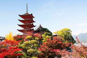 宮島 嚴島神社の五重塔の写真素材 [FYI03017001]