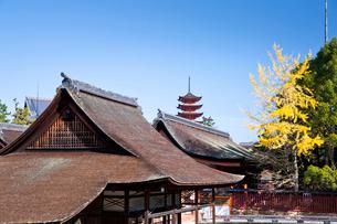宮島 嚴島神社の社殿と五重塔の写真素材 [FYI03017002]