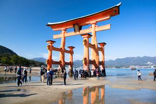 宮島 嚴島神社の大鳥居の写真素材 [FYI03017004]