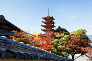 宮島 嚴島神社の五重塔の写真素材 [FYI03017005]