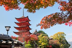 宮島 嚴島神社の五重塔の写真素材 [FYI03017006]