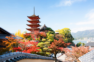 宮島 嚴島神社の五重塔の写真素材 [FYI03017007]