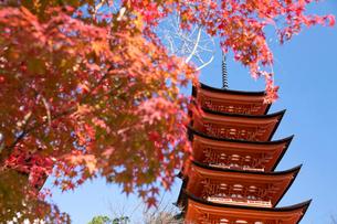 宮島 嚴島神社の五重塔の写真素材 [FYI03017008]