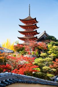 宮島 嚴島神社の五重塔の写真素材 [FYI03017009]