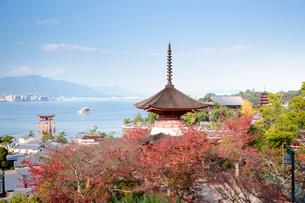 宮島 嚴島神社の多宝塔と大鳥居の写真素材 [FYI03017012]