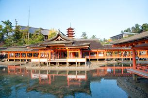 宮島 嚴島神社の社殿と回廊の写真素材 [FYI03017020]