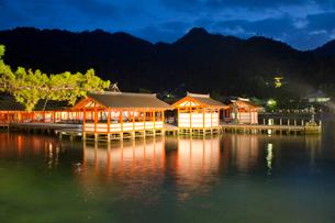 夜の宮島 嚴島神社の社殿 ライトアップの写真素材 [FYI03017021]