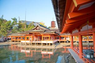 宮島 嚴島神社の社殿と回廊の写真素材 [FYI03017026]