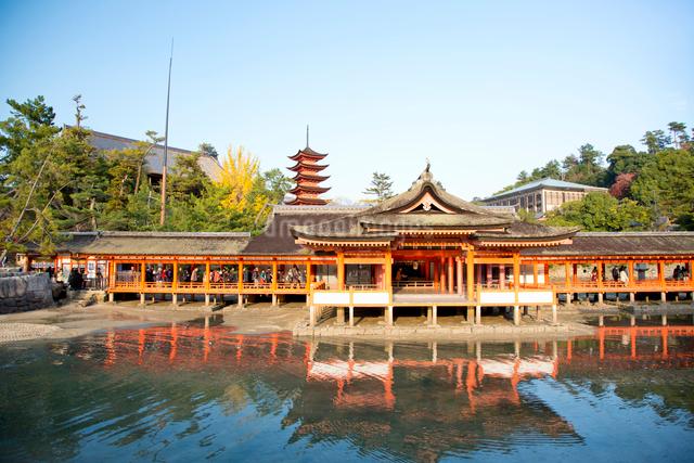 宮島 嚴島神社の社殿と回廊の写真素材 [FYI03017029]
