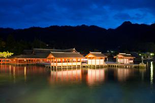 夜の宮島 嚴島神社の社殿 ライトアップの写真素材 [FYI03017031]