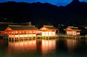 夜の宮島 嚴島神社の社殿 ライトアップの写真素材 [FYI03017035]