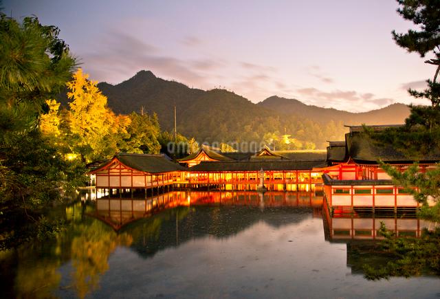 夕景の宮島 嚴島神社の社殿の写真素材 [FYI03017042]