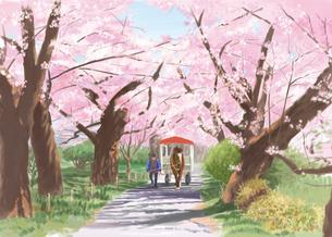 北上展勝地の桜並木を通る馬車のイラスト素材 [FYI03017539]