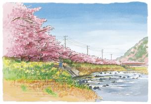 春爛漫の中で咲き誇る河津桜のイラスト素材 [FYI03017596]