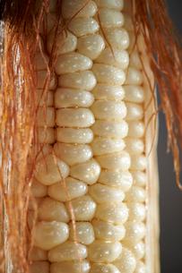 トウモロコシの写真素材 [FYI03017846]