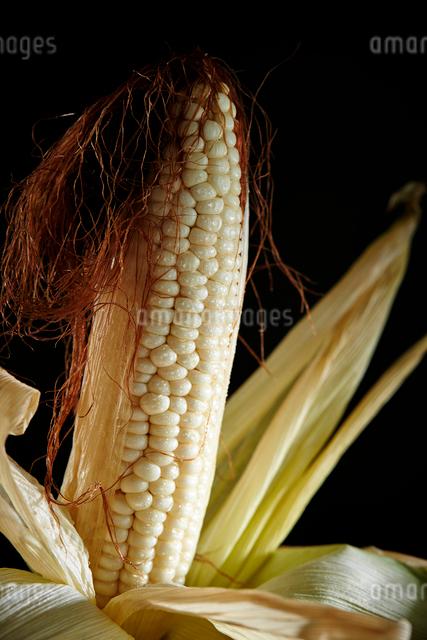 トウモロコシの写真素材 [FYI03017930]