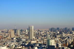 東京都庁から見たスカイツリー方面の写真素材 [FYI03018119]