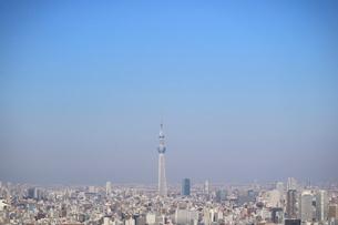 豊洲から見た東京スカイツリー方面の写真素材 [FYI03018123]