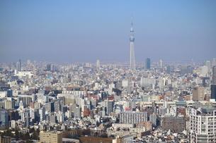 豊洲から見た東京スカイツリー方面の写真素材 [FYI03018128]