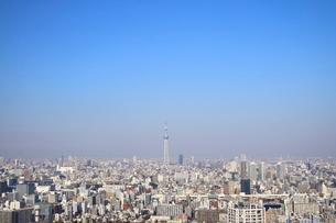 豊洲から見た東京スカイツリー方面の写真素材 [FYI03018132]