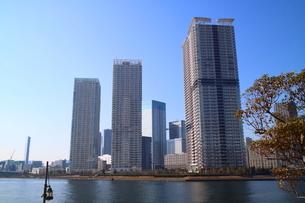 豊洲から見た晴海エリアのタワーマンションの写真素材 [FYI03018143]