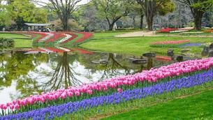 チューリップの咲く風景の写真素材 [FYI03018203]