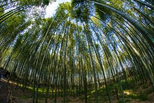 嵐山竹林の写真素材 [FYI03018225]