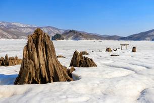 大山祇神社の沈んだ参道の写真素材 [FYI03018431]
