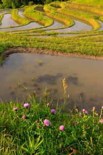 春の大山千枚田の写真素材 [FYI03018446]