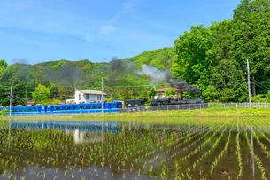 大樹の走る東武鬼怒川線の写真素材 [FYI03018460]
