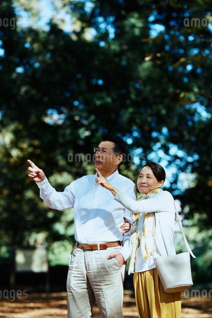 公園で指をさす老夫婦の写真素材 [FYI03018500]