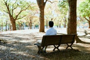 公園で背を向けて遠くを見ながら座る男性の写真素材 [FYI03018524]