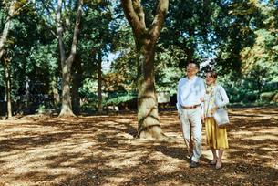 木漏れ日の綺麗な公園で散歩する老夫婦の写真素材 [FYI03018532]