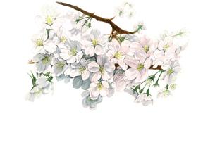 桜満開のイラスト素材 [FYI03018751]
