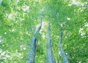 樹木の写真素材 [FYI03024130]
