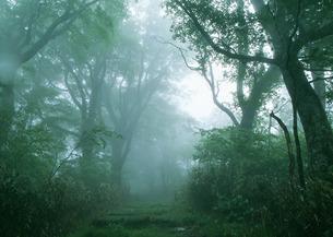 森林の写真素材 [FYI03024231]