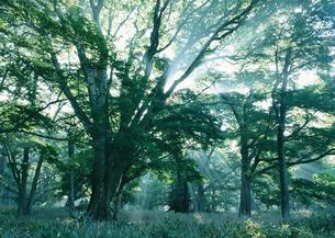木漏れ日の写真素材 [FYI03024239]