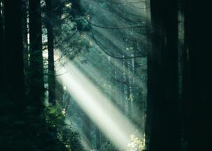 木漏れ日の写真素材 [FYI03024251]