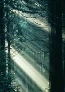 木漏れ日の写真素材 [FYI03024253]