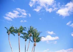青空とヤシの木の写真素材 [FYI03025079]