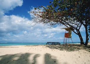 海岸と樹木の写真素材 [FYI03025109]