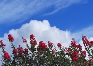花と青空の写真素材 [FYI03025139]