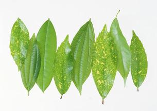 葉いろいろの写真素材 [FYI03026783]