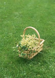 花とかごの写真素材 [FYI03027568]